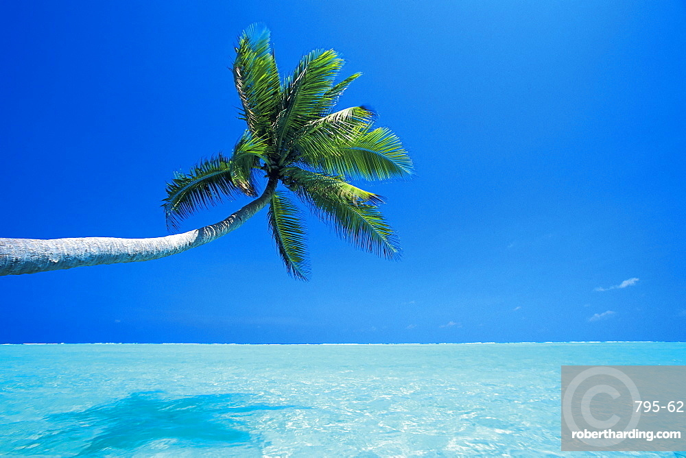 Palm tree overhanging the sea, Male Atoll, Maldives, Indian Ocean, Asia