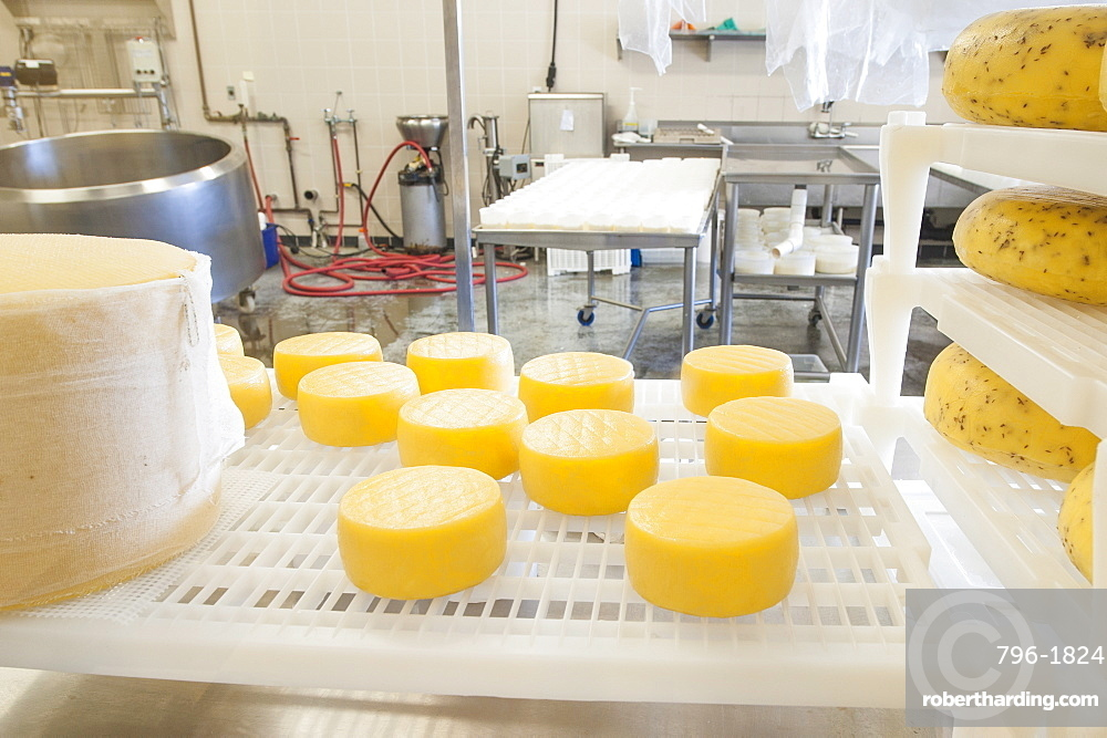 Cheeses at Farm House Natural Cheeses factory, Agassiz, British Columbia, Canada, North America