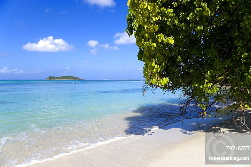 A tree leaning over waves breaking on Paradise Beach at LEsterre Bay with the turqoise sea and Sandy Island sand bar beyond, Caribbean