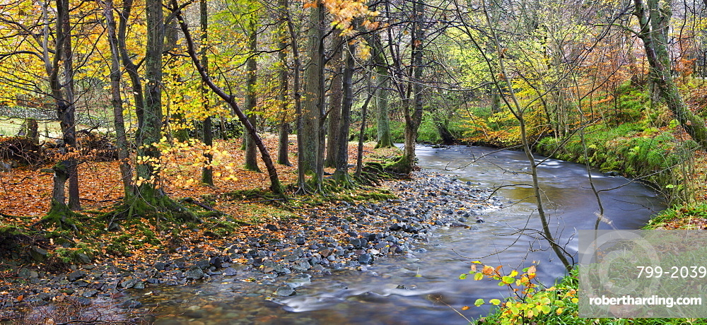 Aira Beck river flowing through autumnal deciduous woodland, Lake District National Park, Cumbria, England, United Kingdom, Europe