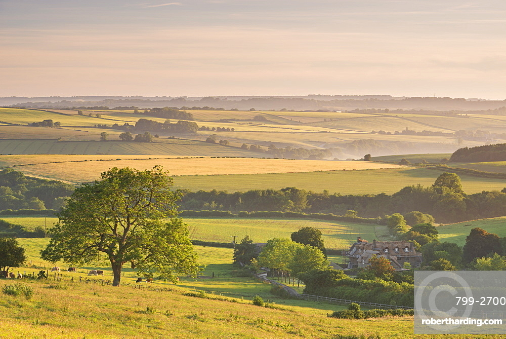 Rolling countryside and thatched cottage near Frome, Somerset, England, United Kingdom, Europe
