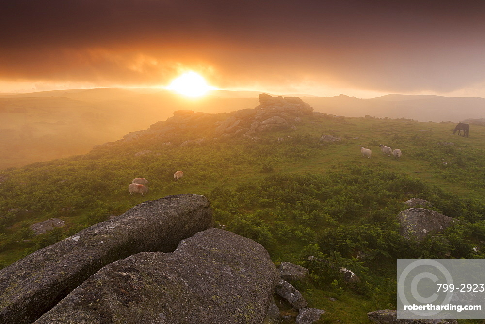 Misty summer sunset at Holwell Tor in Dartmoor National Park, Devon, England,United Kingdom, Europe