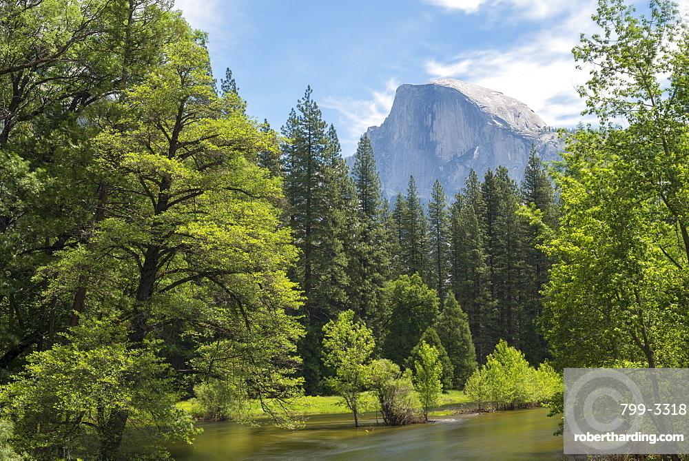 Half Dome mountain above the River Merced in springtime, Yosemite Valley, UNESCO World Heritage Site, California, United States of America, North America