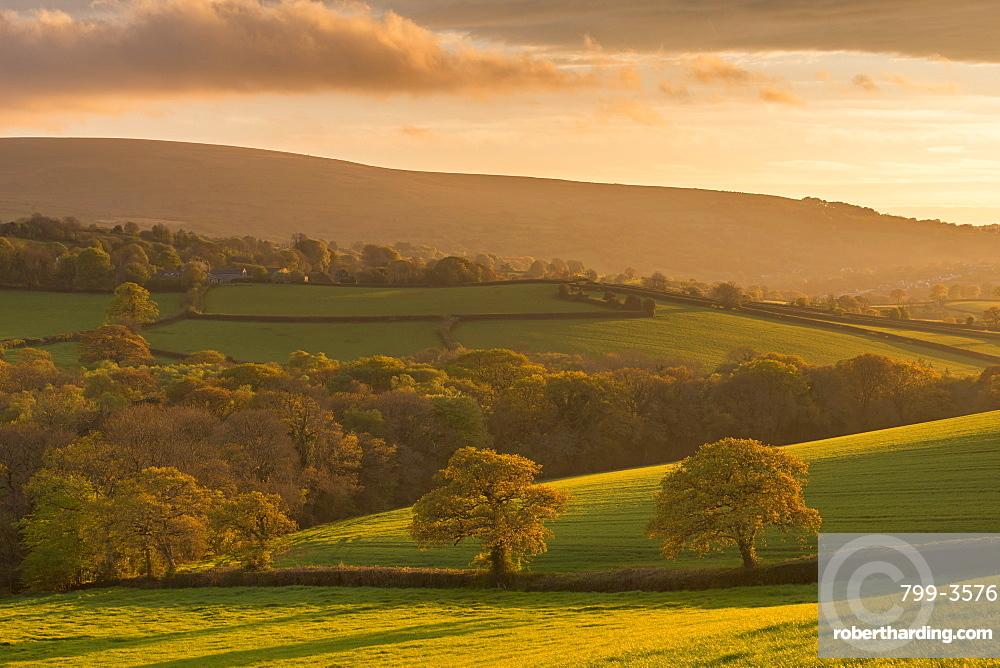 Rich evening spring sunshine bathes the rolling Devon countryside in golden light, Dartmoor, Devon, England, United Kingdom, Europe