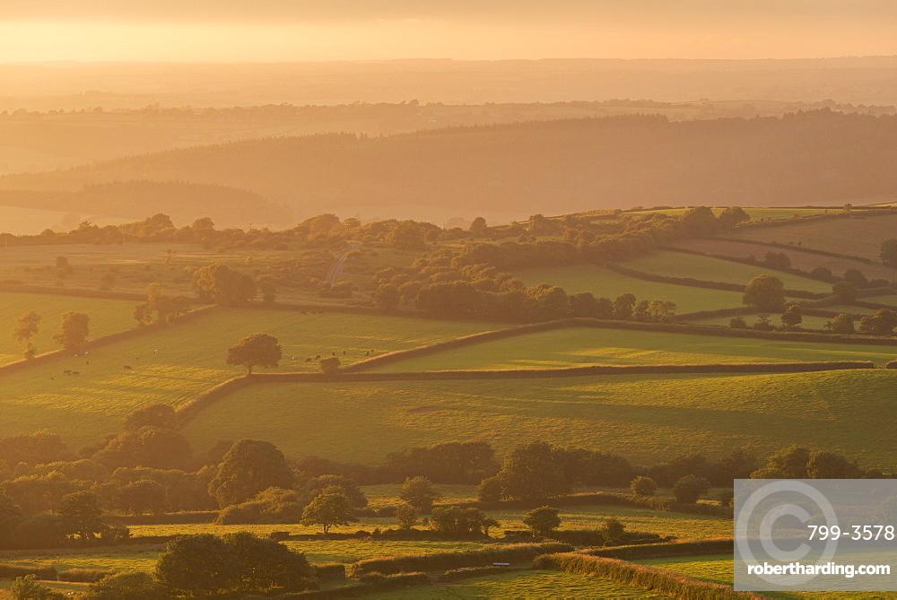 Rolling Dartmoor countryside on a summer evening, near Brentor, Devon, England, United Kingdom, Europe