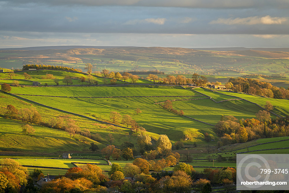 Rolling countryside near Malham in autumn, Yorkshire Dales National Park, Yorkshire, England, United Kingdom, Europe