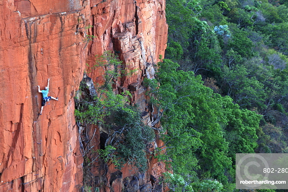 A climber on the sandstone cliffs of Waterval Boven, South Africa, Africa