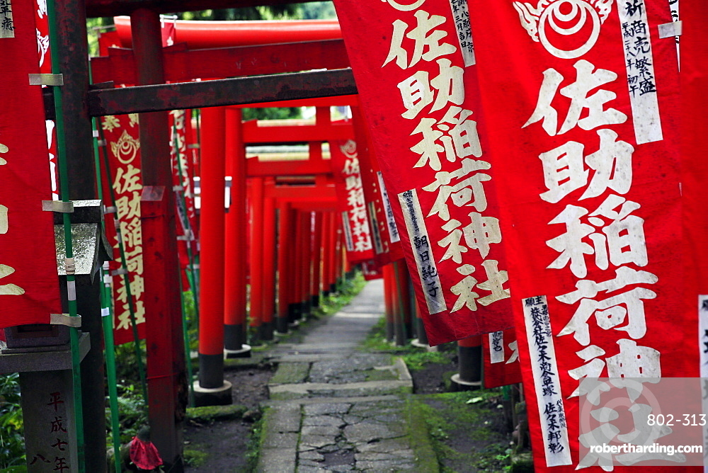 Alley in the Kamakura hills, Honshu, Japan, Asia