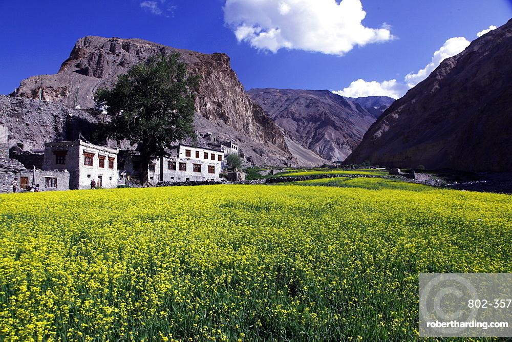 A mountain village in the Markha Valley, Zanskar, India, Asia