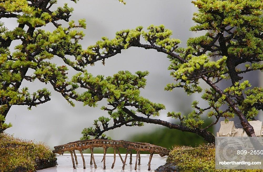 Bonsai trees, Sydney, New South Wales, Australia, Pacific