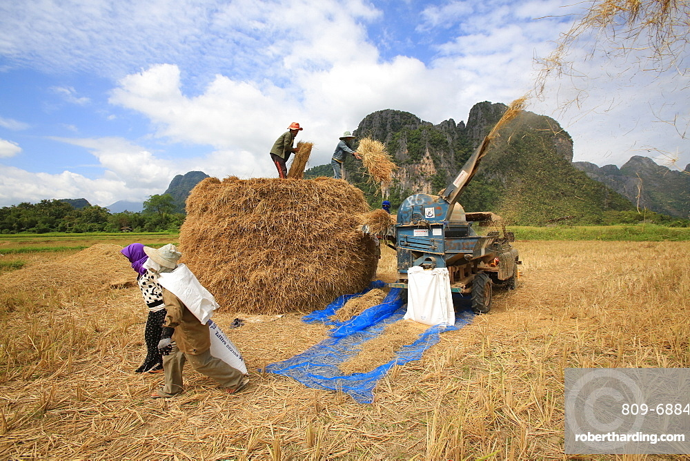 Rice field, Lao farmers harvesting rice in rural landscape, Laos, Indochina, Southeast Asia, Asia