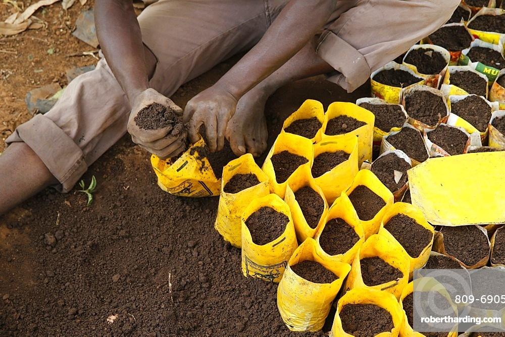 Innocent Mbabazi runs a tree nursery, Masindi, Uganda, Africa