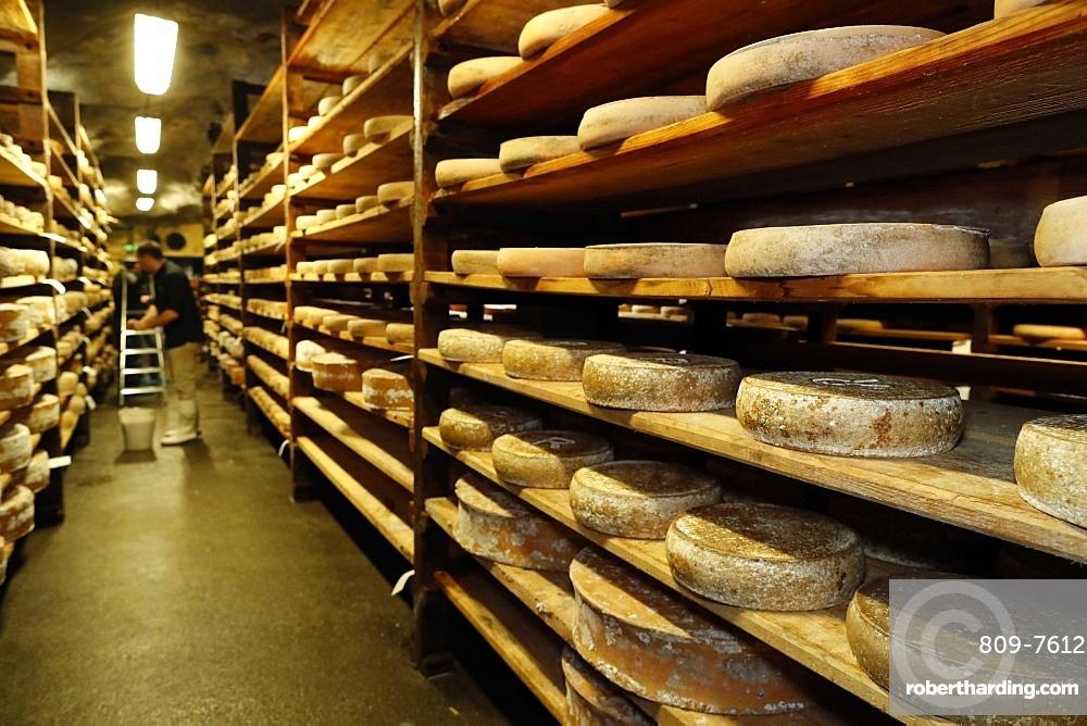 Artisanal Beaufort cheese in a traditional cellar, Rognaix, Savoie, France, Europe