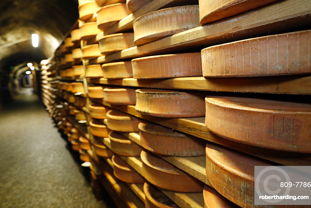 Artisanal Beaufort cheese refining in a traditional cellar, Rognaix, Savoie, France, Europe