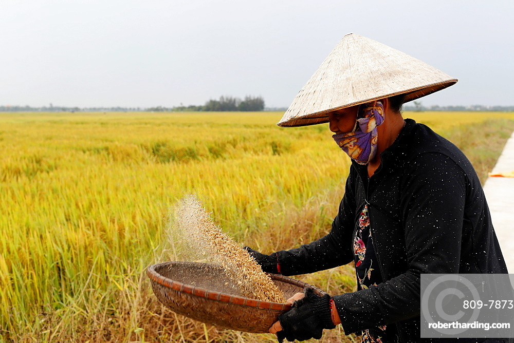 Woman winnowing rice, Hoi An, Vietnam, Indochina, Southeast Asia, Asia