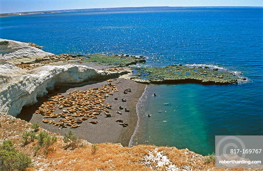 Fur seal colony, Punta Loma, Puerto Madryn, Argentina.