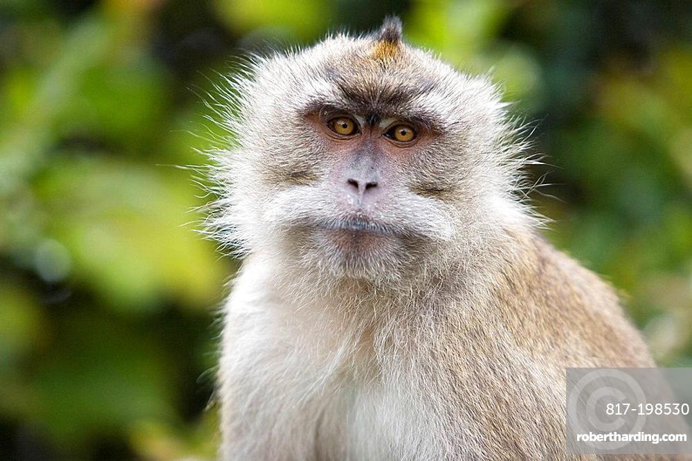 Mauritius, monkey