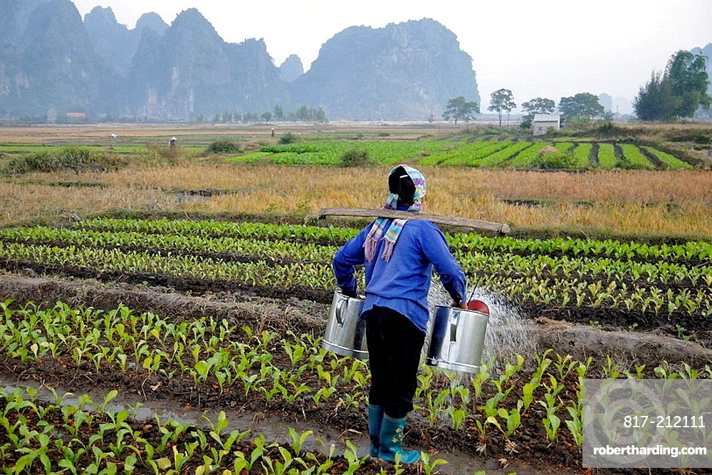Female farmer watering the crops with two watering cans in Bai Dai, Bai Tu Long, Vietnam