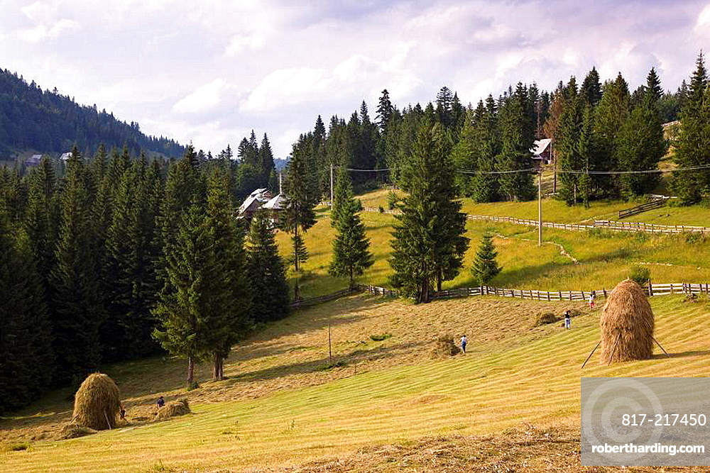 Hay harvest and haystack in the Apuseni Mountains in the western Carpathians  In this remote and isolated moutain area the moutain frames still use traditional mowing by hand with scythe or cutterbar mower to harvest gras for the lifestock in winter