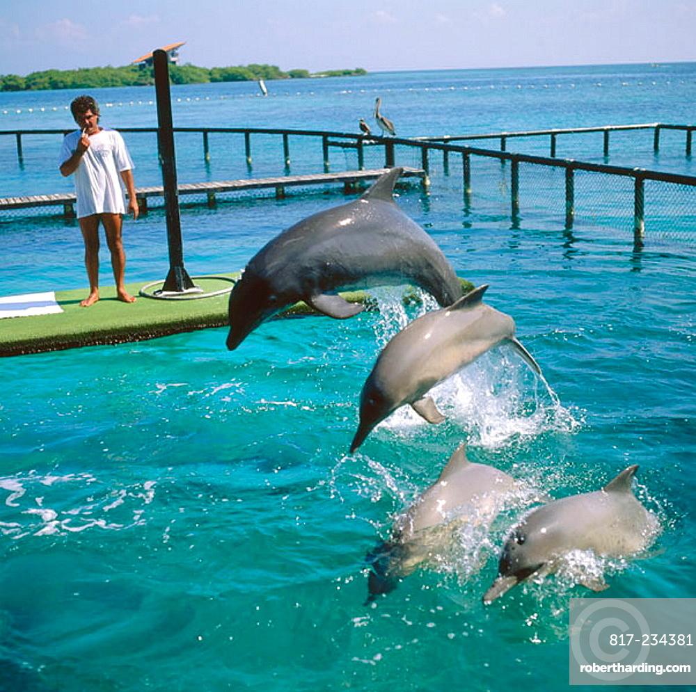 Dolphins in San Martin de Pajarales aquarium, Rosario Islands, Cartagena de Indias, Colombia