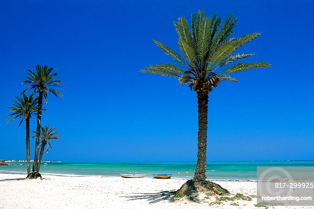 Tunisia, Djerba island, Seguia Beach, Africa, North Africa, Mediterranean Sea, coast, island, Beach, palm trees, holid. Tunisia, Djerba island, Seguia Beach, Africa, North Africa, Mediterranean Sea, coast, island, Beach, palm trees, holid