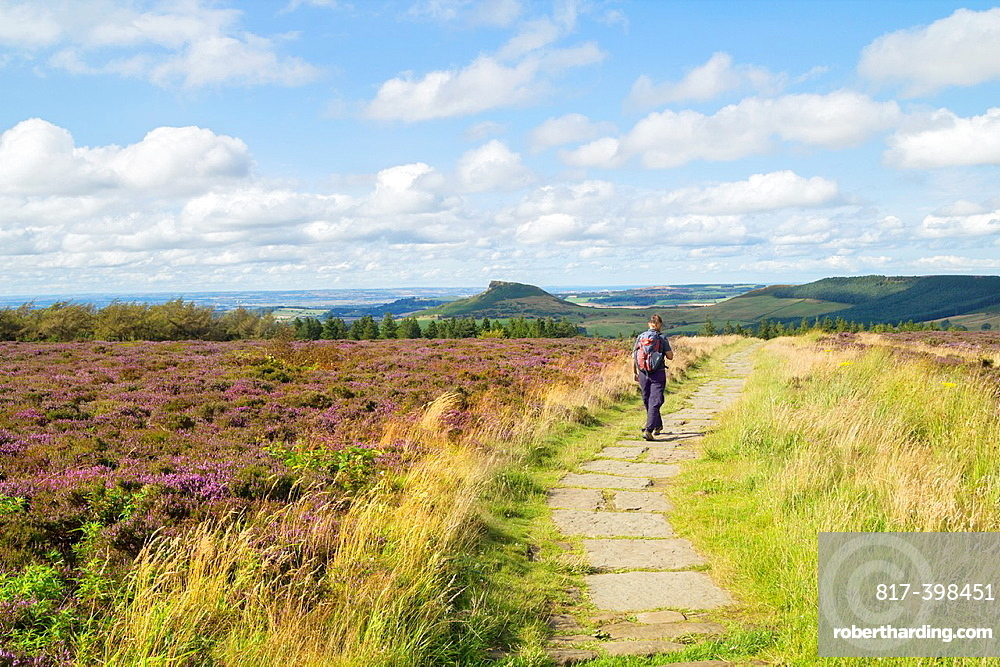 Female hiker on The Cleveland Way near Captain Cooka´s monument on Easby Moor near Great Ayton  Roseberry Topping in distance The Cleveland Way National Trail, North York Moors National park, North Yorkshire, England, United Kingdom