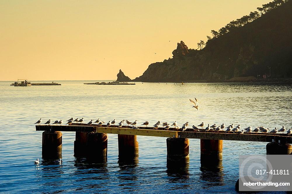 Europe, France, Alpes-Maritimes, Mandelieu Seagulls