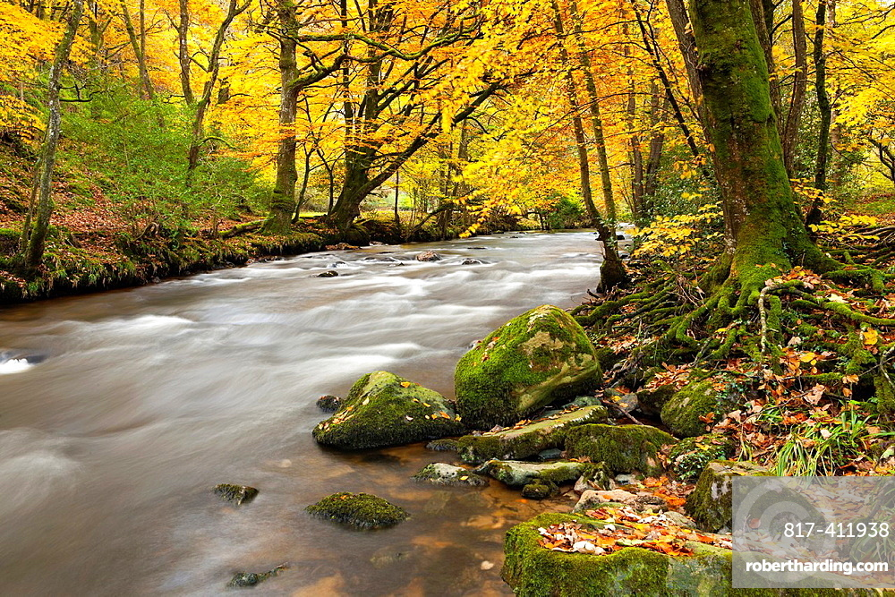 The River Teign flowing through Dunsford Wood in autumn in the Dartmoor National Park, Devon, England, UK, Europe