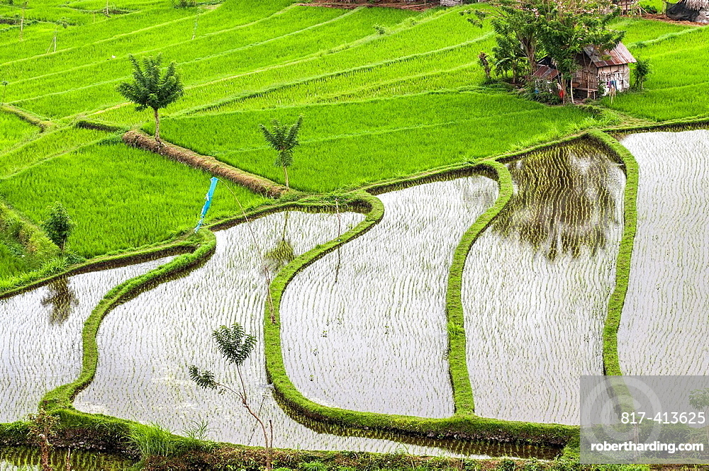 Looking across the rice fields at Tirtagangga, Eastern Bali, Indonesia