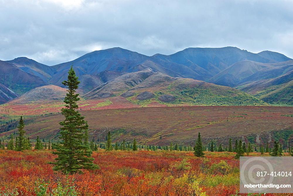 Denali National Park, Alaska shows off its fall colors