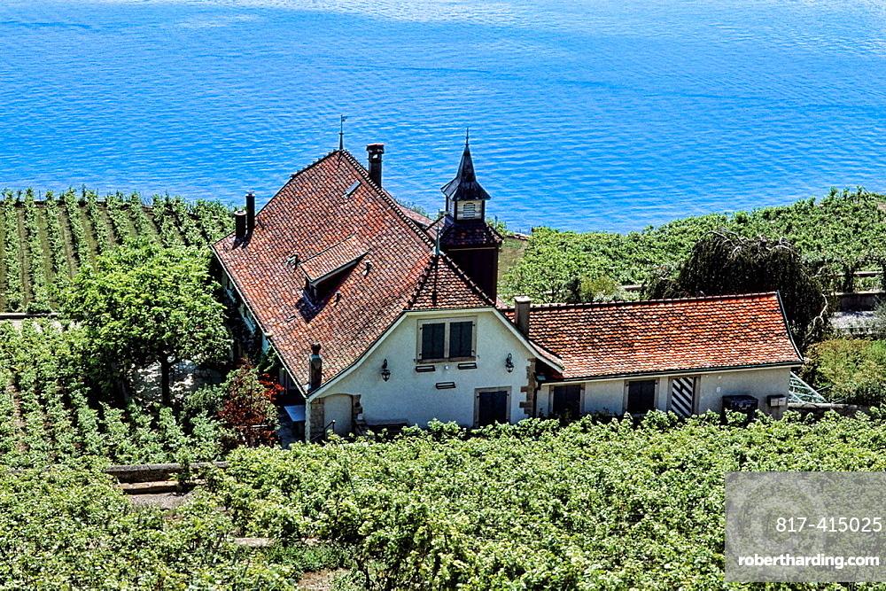 Switzerland Aerial view of vineyards near Montreux on Lake Geneva Switzerland