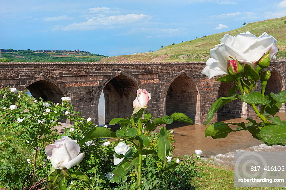 White Roses in front of a Bridge over the Tigris river, Diyarbakir, Eastern Turkey