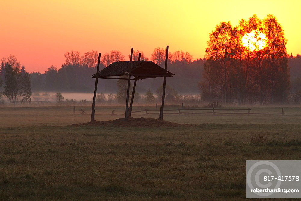 Sunrise in Bialowieza National Park  Poland