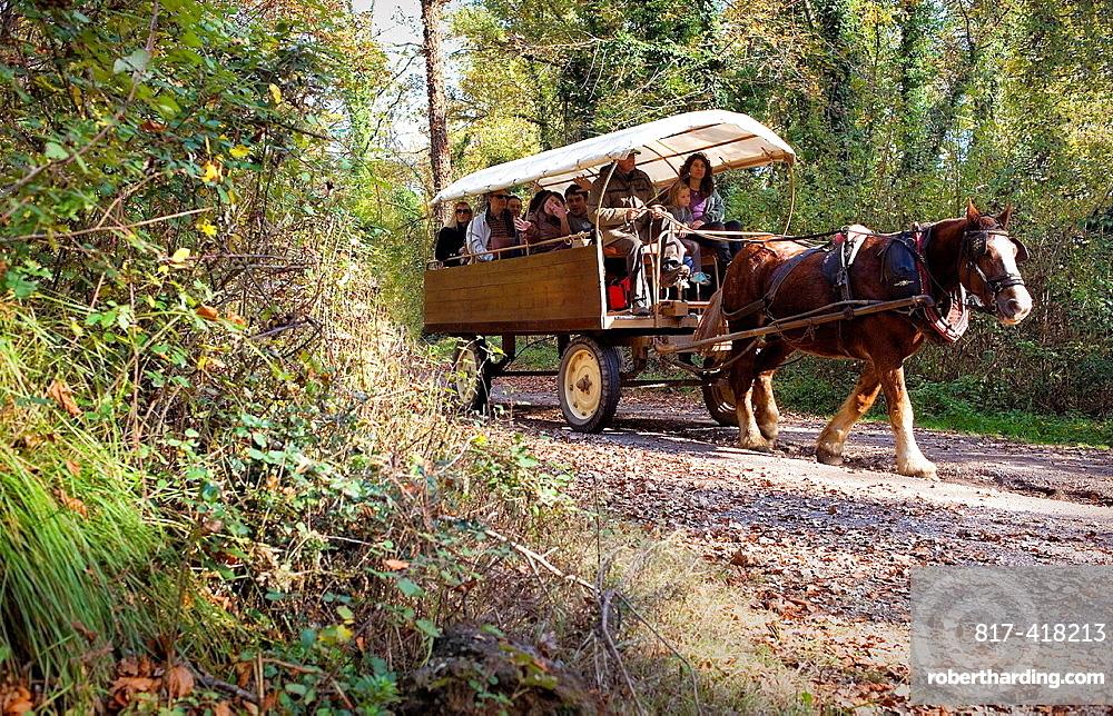Touristic carriage in Fageda d¥en Jorda,Garrotxa Natural Park,Girona province, Catalonia, Spain
