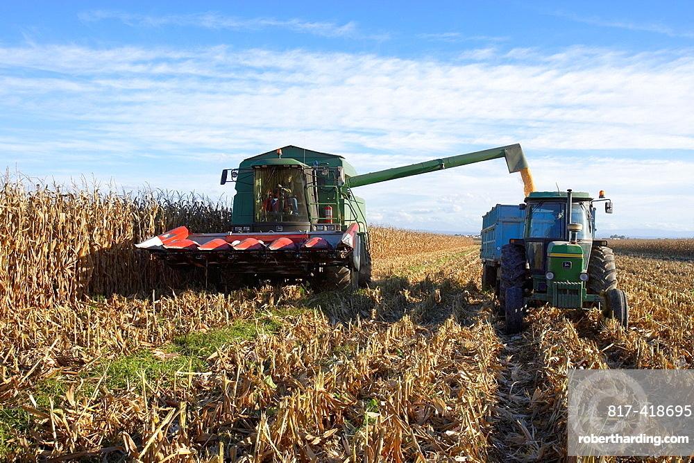 Combine-harvester on a field of corn, Lleida, Spain