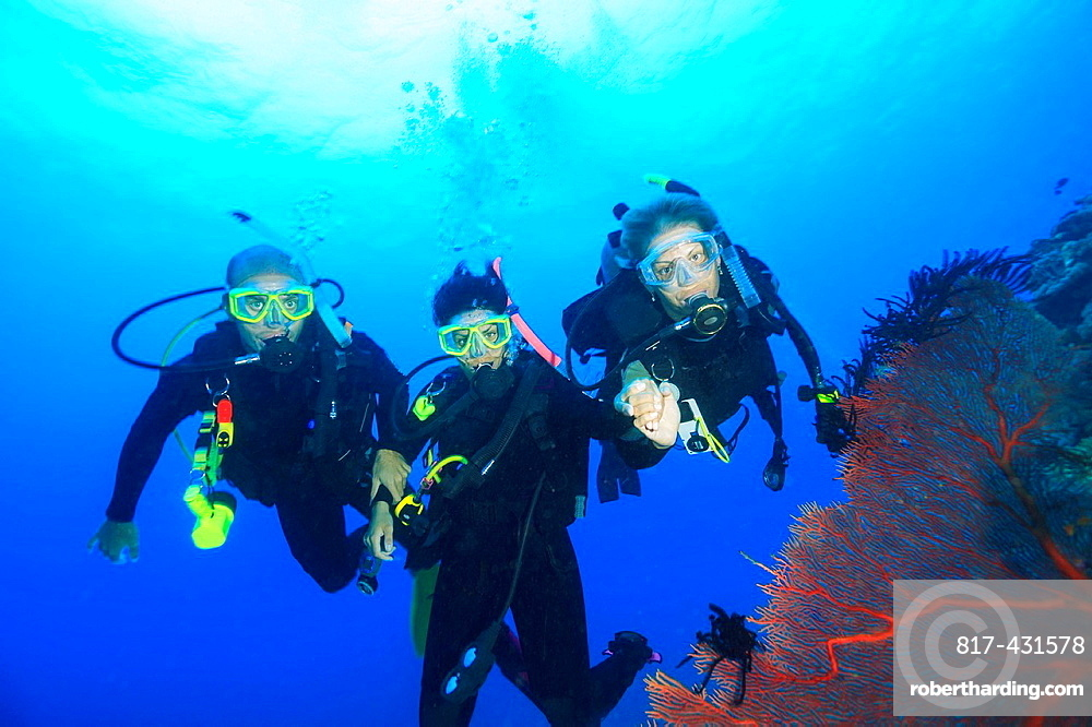 Divers swimming in coral reef