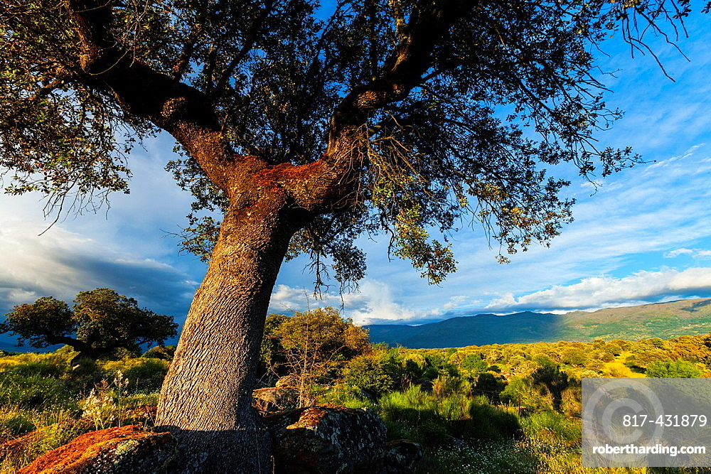 Ambroz Valley  Caceres  Extremadura  Spain.