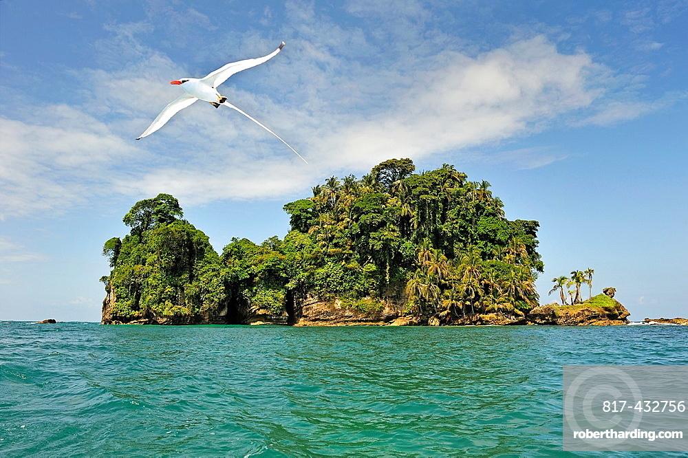 Seabirds Tropicbirds, Pajaros Islet Also Named Swan'S Cay Off The Coast Of Boca Del Drago On Colon Island, Bocas Del Toro Archipelago, Republic Of Panama, Central America