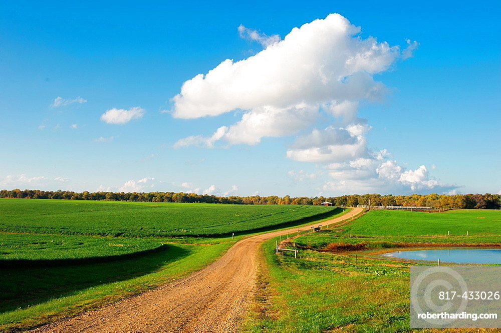 Open dirt road on a farm, Chestertown Maryland USA