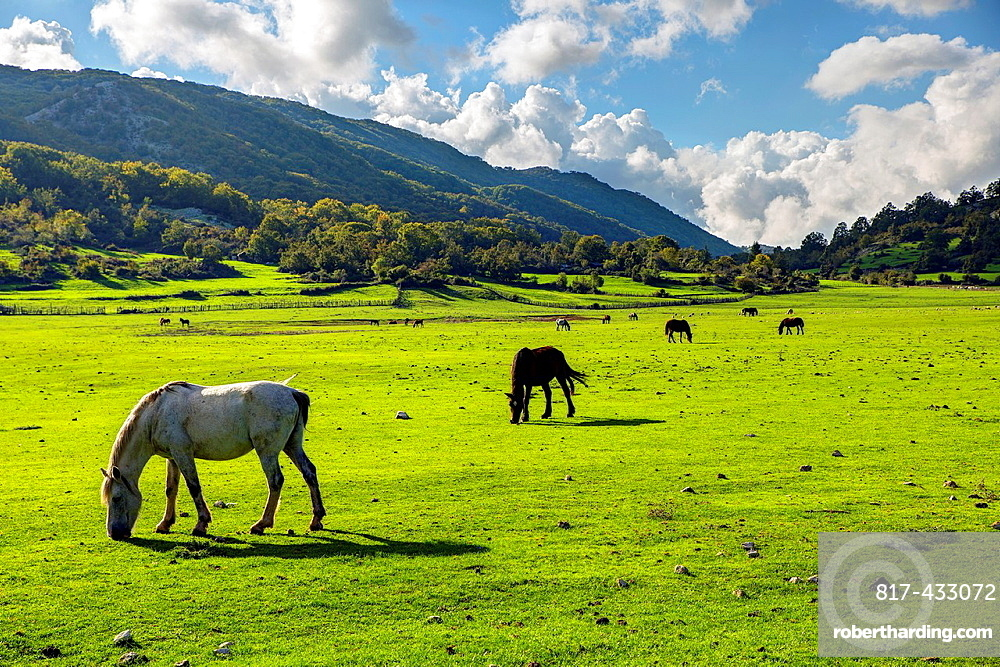 Horses in an open praire Italy