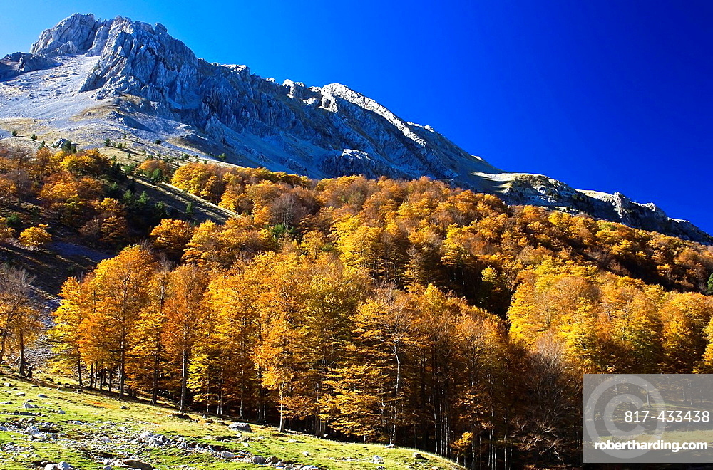 Beech forest in autumn In the background the Sierra de Alano, Barranco Taxeras, Zuriza, Anso, Anso Valley, Huesca, Aragon Pyrenees, Aragon, Spain, Europe