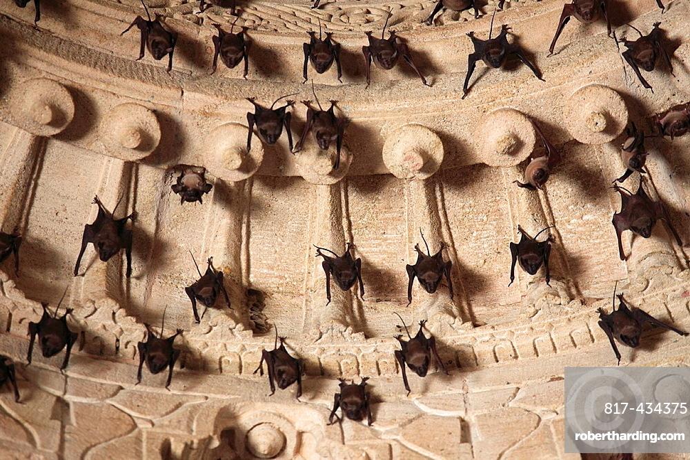 India, Gujarat, Modhera, Sun Temple, interior, bats,
