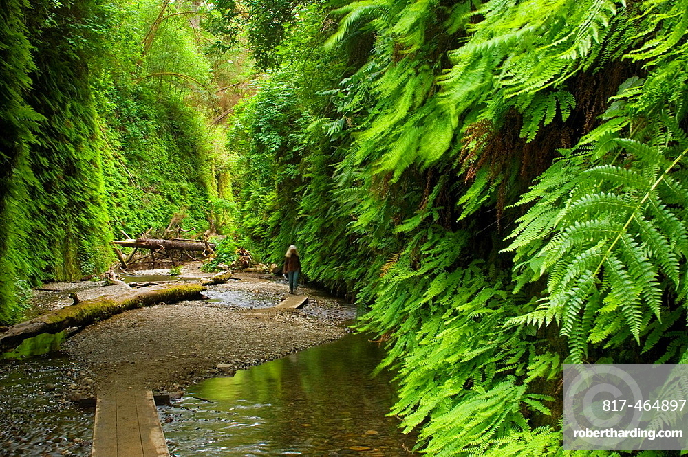Boardwalk trail through Fern Canyon, Prairie Creek Redwoods State Park, California.