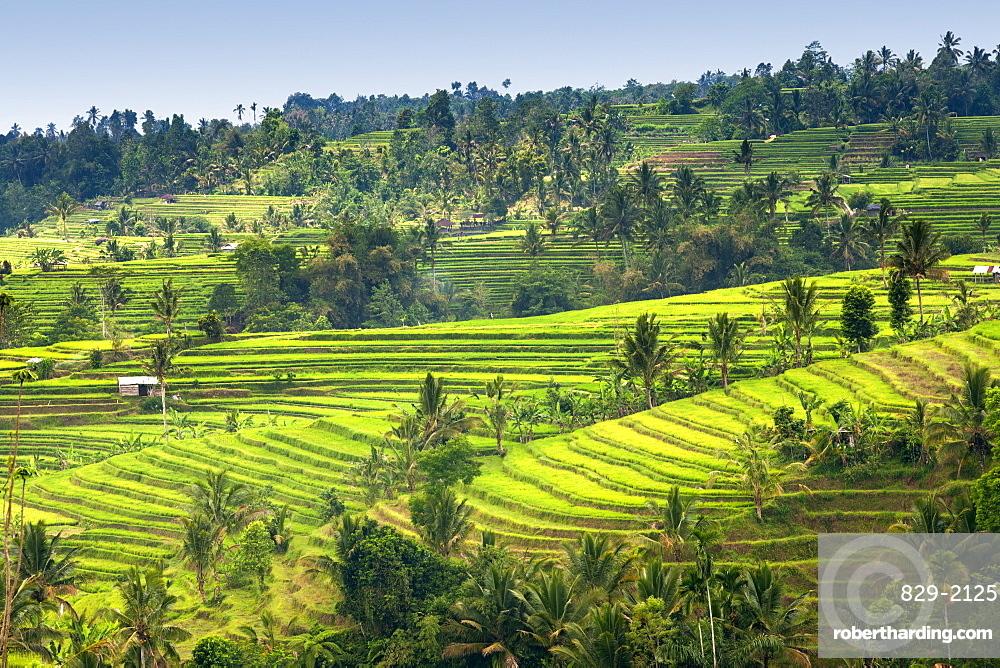 Jatiluwih rice terrace paddies in Bali, Indonesia.