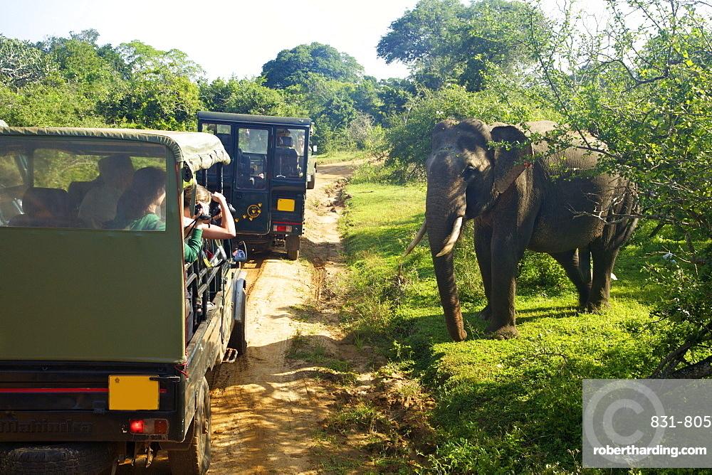 Asiatic tusker elephant (Elephas maximus maximus), close to tourists in jeep, Yala National Park, Sri Lanka, Asia