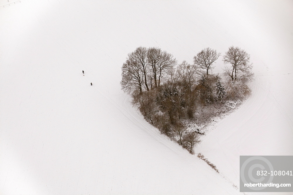 Aerial view, heart-shaped group of trees, snow, Oelmuehlenweg street, Hachhausen, Datteln, Ruhr area, North Rhine-Westphalia, Germany, Europe