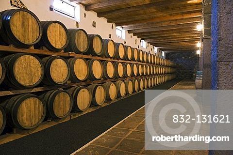 Wine barrels in wine cellar, winery, Bodega, La Geria, Lanzarote, Canary Islands, Spain, Europe
