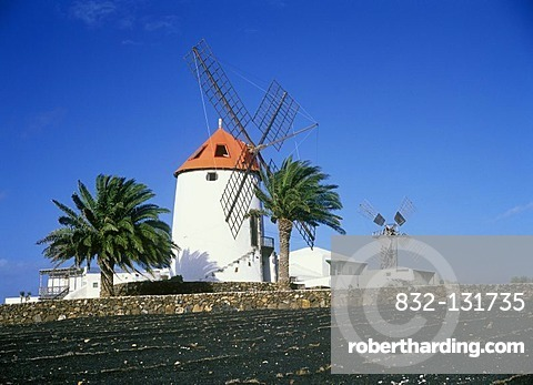 Windmill and palm trees in Tiagua, Lanzarote, Canary Islands, Spain, Europe