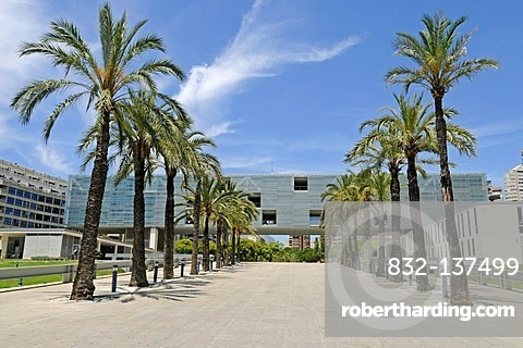 Town Hall, palm trees, Benidorm, Costa Blanca, Alicante, Spain, Europe