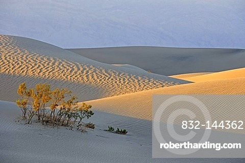 Morning light at the Mesquite Sand Dunes, Death Valley National Park, California, USA, America